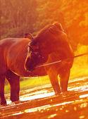 Horse in sunny twilight — Stock Photo