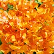 Orange Mediterranean blossom, Cyprus — Stock Photo #7508481