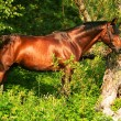 Beautiful bay gloss horse in the verdure — Stock Photo