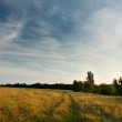 Evening landscape with cirrus clouds over field — Stock Photo #7125544