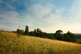 Evening Landscape with cirrus clouds, grasses and trees — Stock Photo