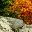 Autumn landscape with golden foliage and stone — Stock Photo