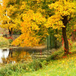 Autumn landscape with tree and pond — Stock Photo