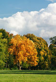 Autumn landscape with a golden oak — Stock Photo