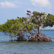 Small island with seabirds — Stock Photo