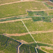 Aerial vinyard view — Stock Photo