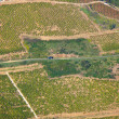Aerial vinyard - Stock Photo