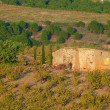 Hut in Banyuls sur Mer vineyard - Stock Photo
