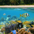 Colors of Caribbean sea - Stock Photo