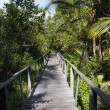 Bridge in the jungle - Stock Photo