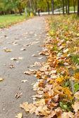 Тропа в Осенний парк — Стоковое фото