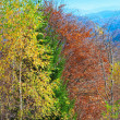 Stock Photo: Autumn mountain forest