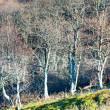 Autumn stark bare trees — Stockfoto