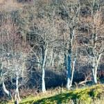 podzimní neúprosná holé stromy — Stock fotografie