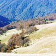 Stok fotoğraf: Autumn mountains and stark bare trees