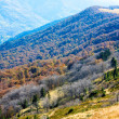 Autumn mountains  and stark bare trees — Stock Photo