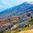 Autumn mountains and stark bare trees — Stock Photo #6864274