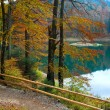 Autumn tree and Synevir lake — Stock Photo