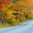 Autumn road in forest — Stock fotografie