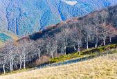 Autumn stark bare trees — Stock Photo