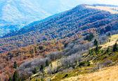 Autumn mountains and stark bare trees — Stock Photo