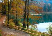 Herbst baum und sinewirsee see — Stockfoto