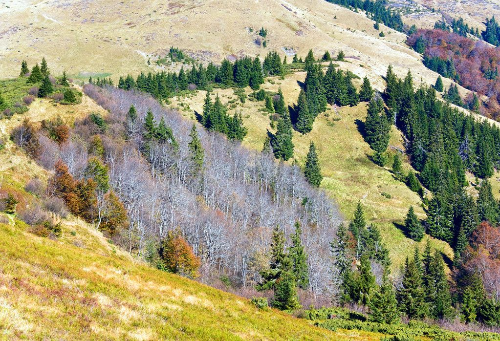 Autumn mountains  with a stark bare trees on forest mountainside edge (Carpathian, Ukraine). — Foto Stock #6864200