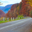 Autumn road in forest — Stockfoto