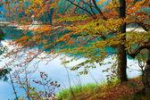 Autumn tree and Synevir lake — Stockfoto