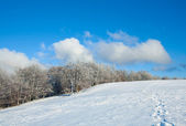 First winter snow and mountain beech forest — Стоковое фото
