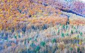 Autumn mountain forest — Stock Photo