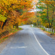 Stock Photo: Autumn road in forest