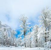 Snowbound winter earthroad — Stock Photo