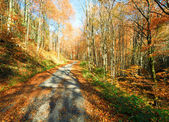 Autumn mountain country road — Stock Photo