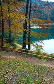 árbol de otoño y lago synevir — Foto de Stock