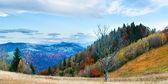 Autumn misty morning mountain panorama — Stock Photo