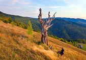 Evening autumn mountain — Stock Photo