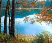 Autumn tree and Synevir lake — Stock Photo