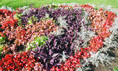 Flowerbed composition — Stock Photo