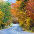 Autumn road in forest — Stock Photo