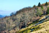 秋の硬直した裸の木 — ストック写真