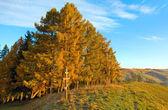 Autumn morning mountain and wooden cross — Stock Photo