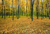 Foresta di montagna d'autunno — Foto Stock
