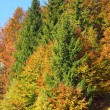 Autumn mountain forest - Stock Photo