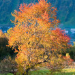 Autumn evening mountain hill — Stock Photo #7384025