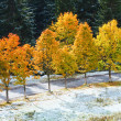 First winter snow and autumn colorful foliage near mountain road - Stock Photo