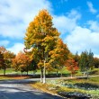 first winter snow and autumn colorful foliage near mountain road — Stock Photo