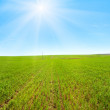 Spring field morning panorama with blue sky and sunshine — Stock Photo #7560074
