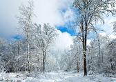 Invierno nieve earthroad — Foto de Stock