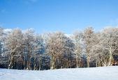 Första vintern snö och berg bokskog — Stockfoto
